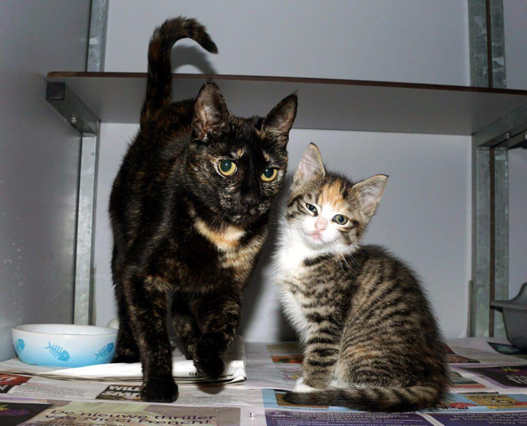 SZR Adoptiekat Dotta en Dottir (3)