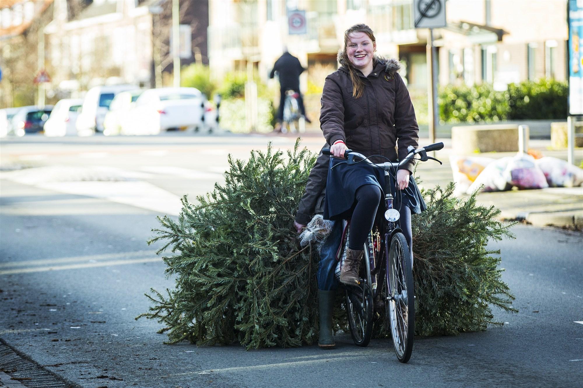 kerstboom op straat