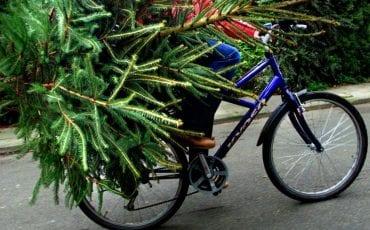 weggooien kerstboom tilburg