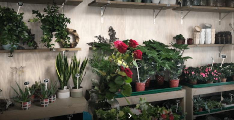 Bij Laan Bloemen & Planten