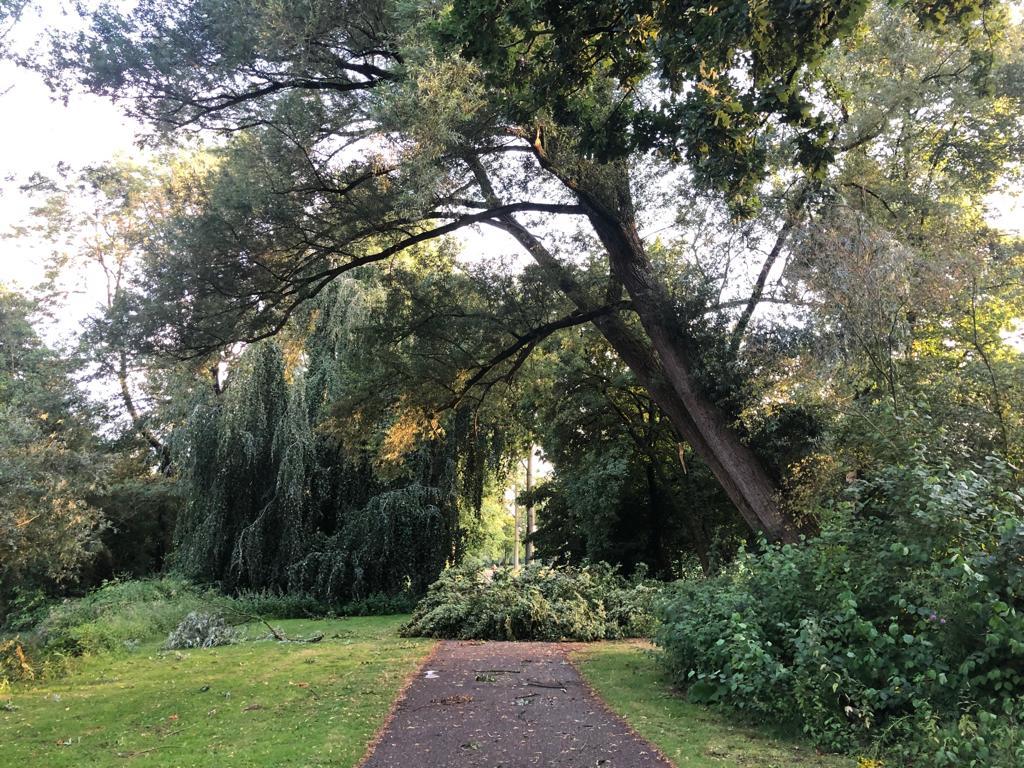 bomen omgewaaid leijpark