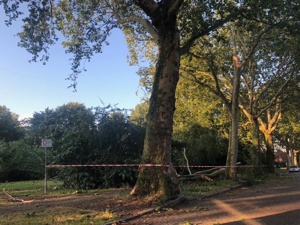storm in tilburg bomen omgewaaid leijpark