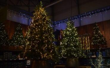 kerstboom ophalen