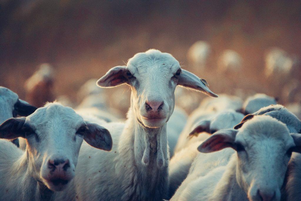 stakingen utrecht kinderen geiten