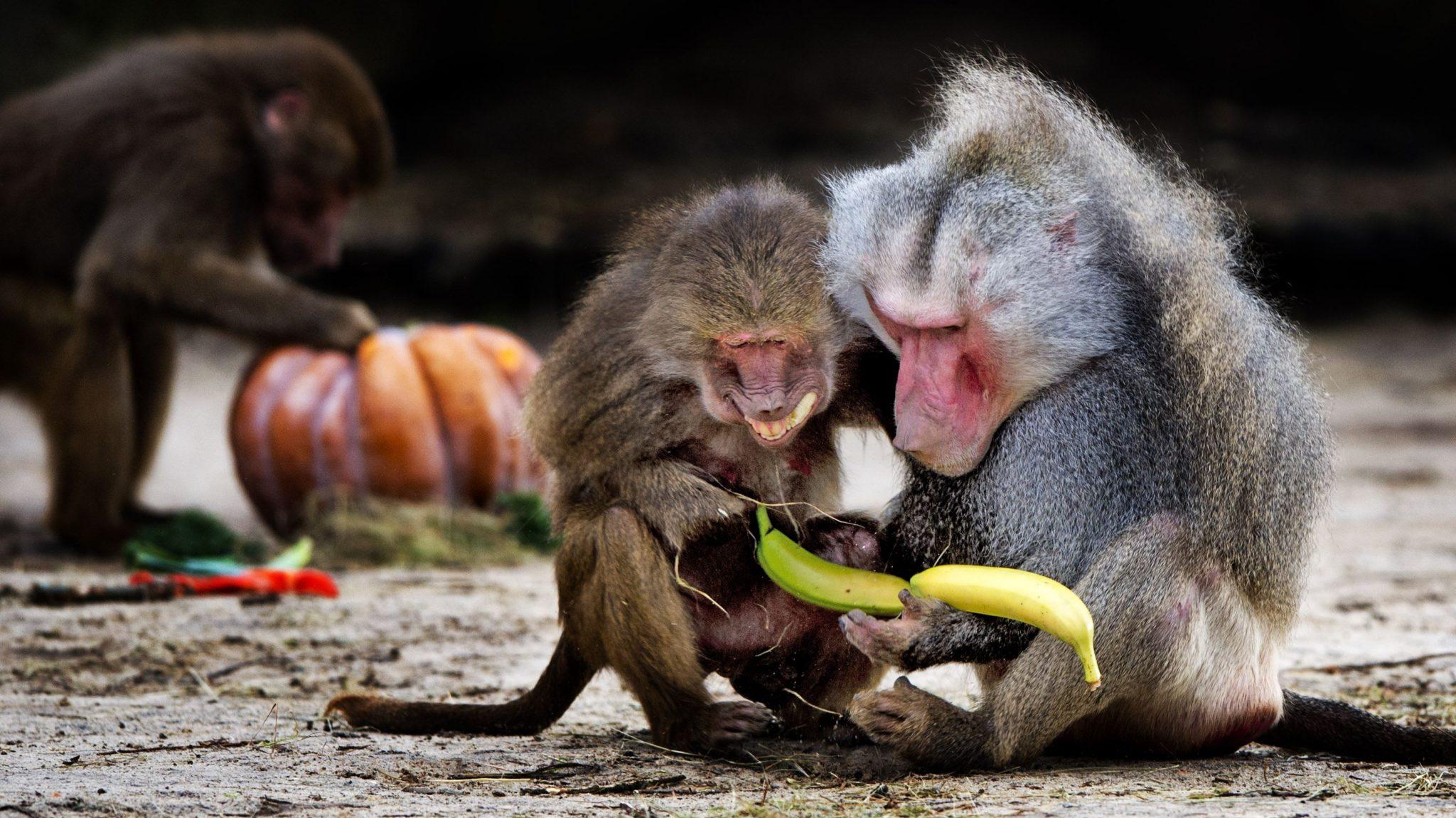 AH Bananen