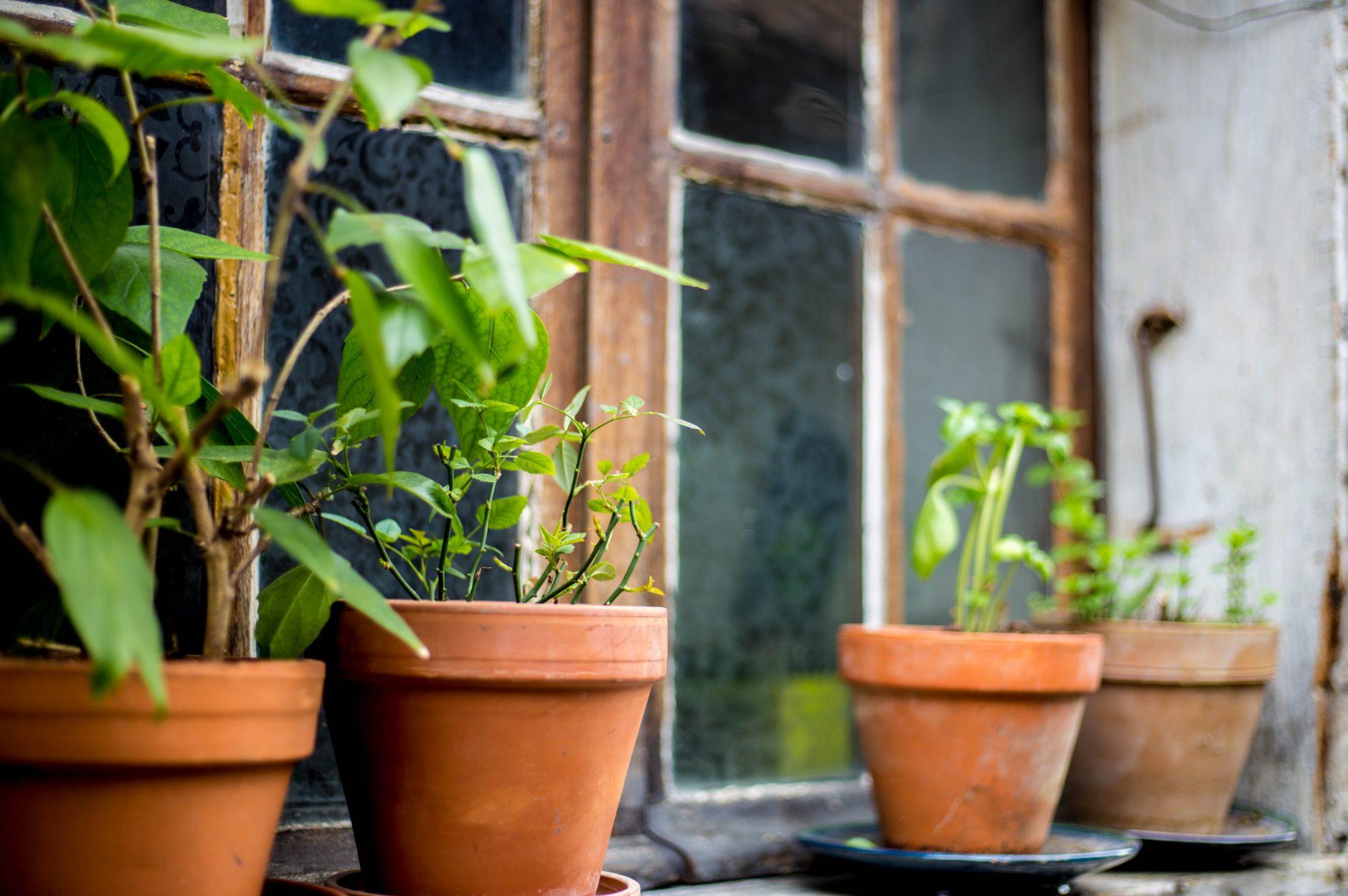 plant-groen-tuin-utrecht-2