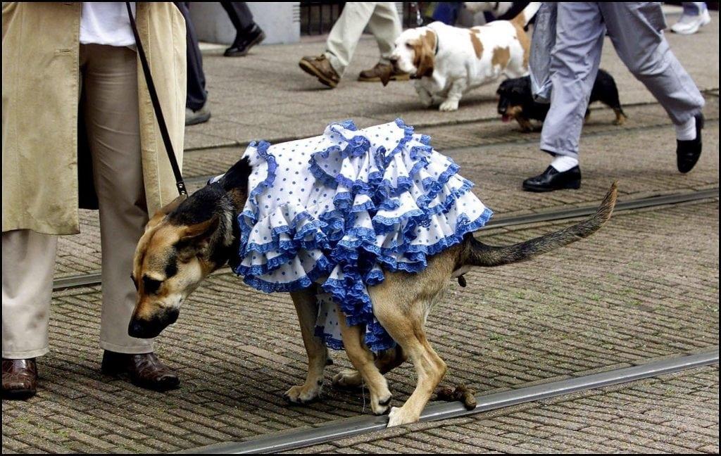 honden hond uitlaten utrecht