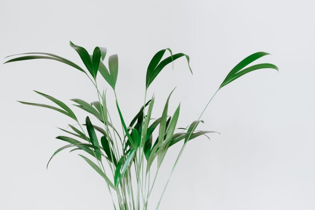 planten-tuincentrum-vleuten