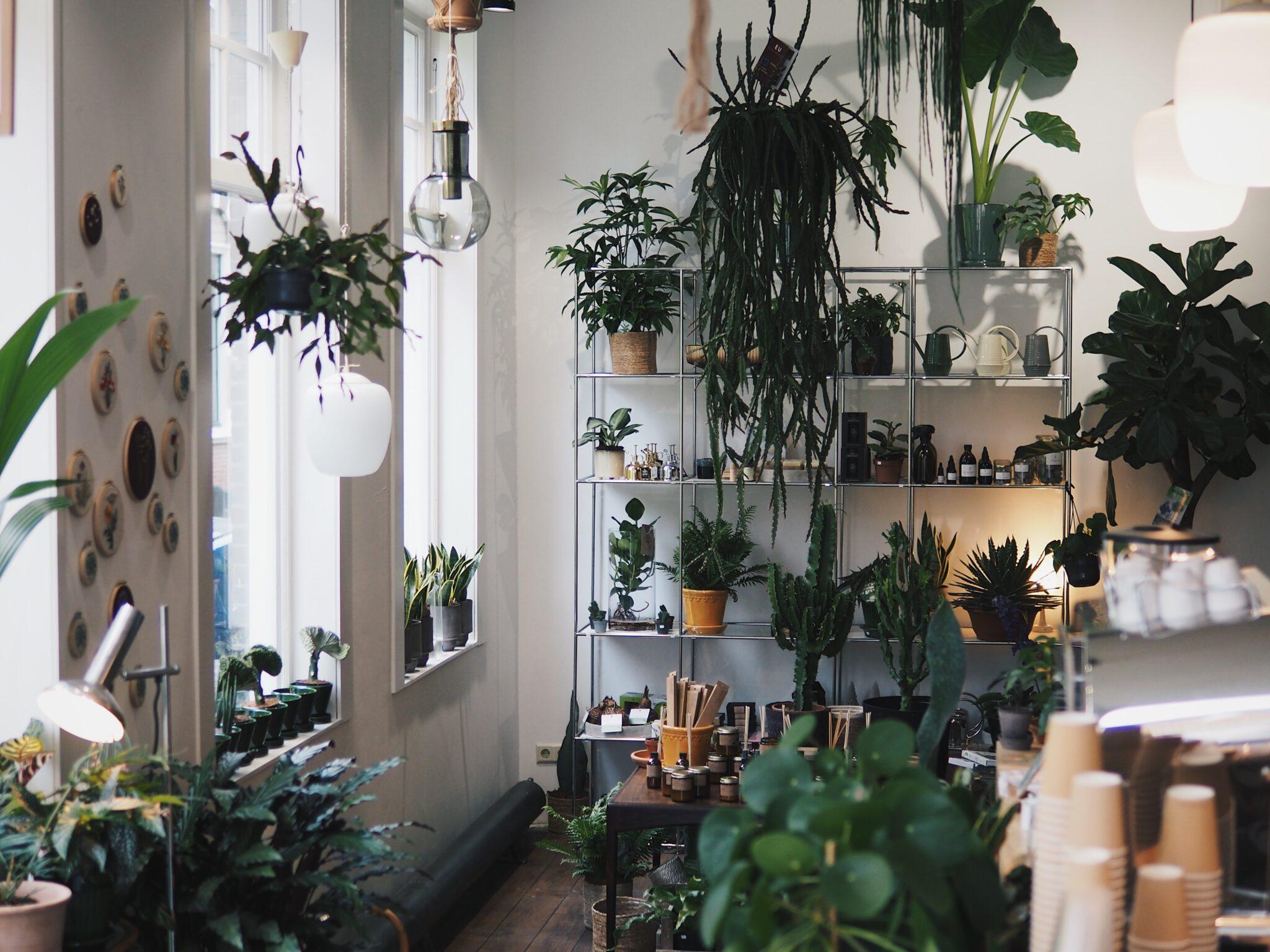 planten utrecht wonderwoud