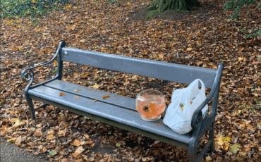 goudvissen achtergelaten park