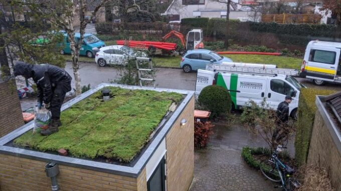 Interpolis groen dak