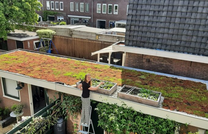 Groen dak interpolis Lisette