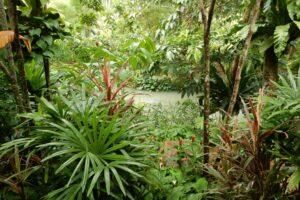 De Plantenpotten 03 Thailand