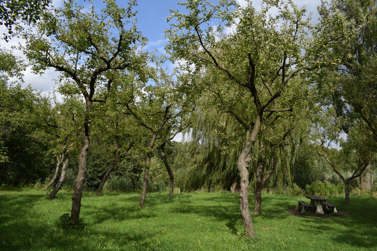 Appelbomen in het Brediuspark