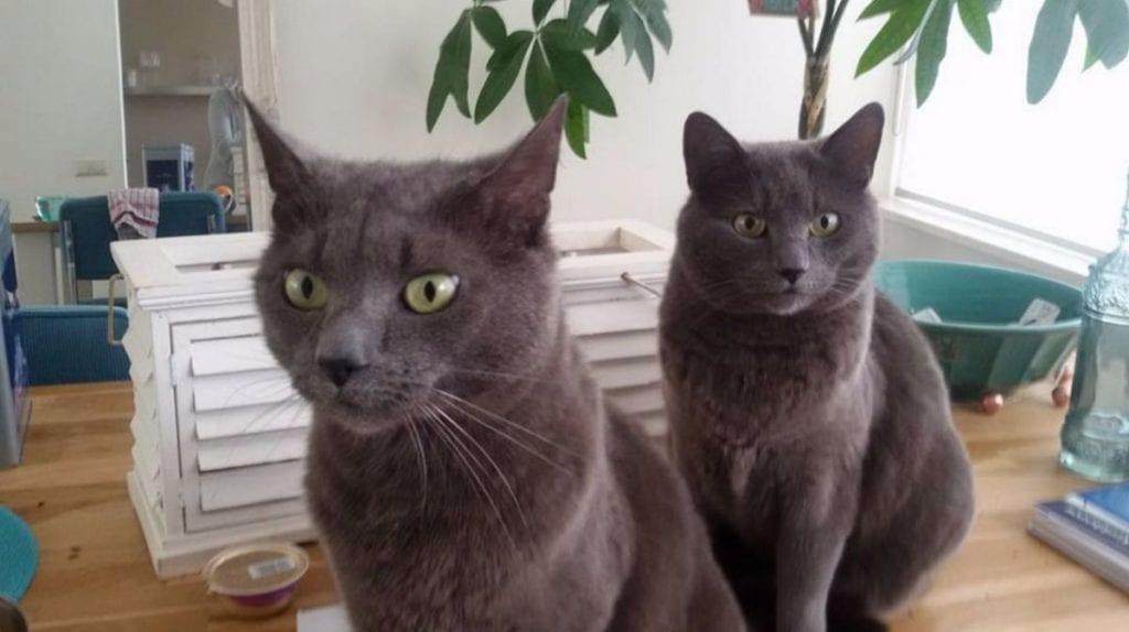 Kattenoppas Woerden