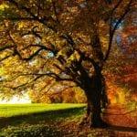 Herfst wandelen vlak bij Woerden