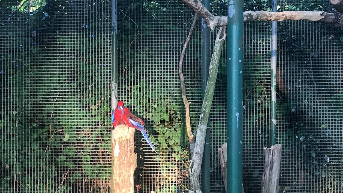 vogels voliere