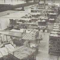 De Woerdense Bloemencentrale in 1989
