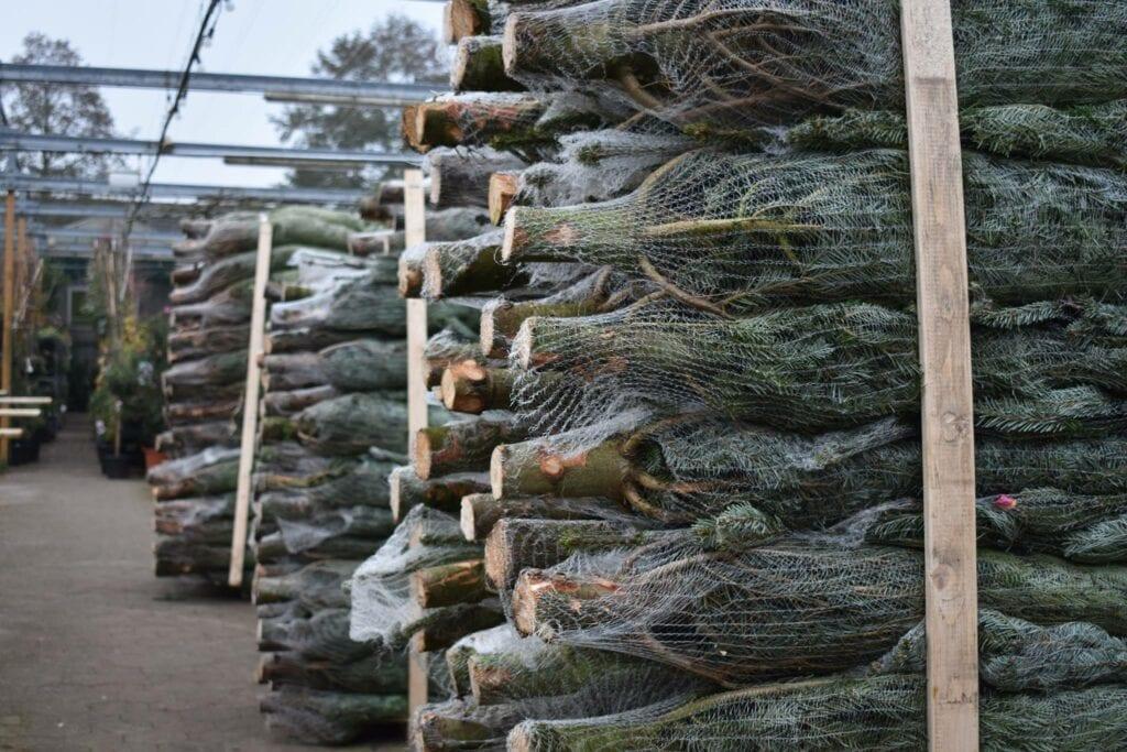 Kerstboom Zoetermeer