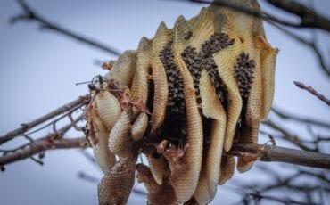 Bijennest Zoetermeer