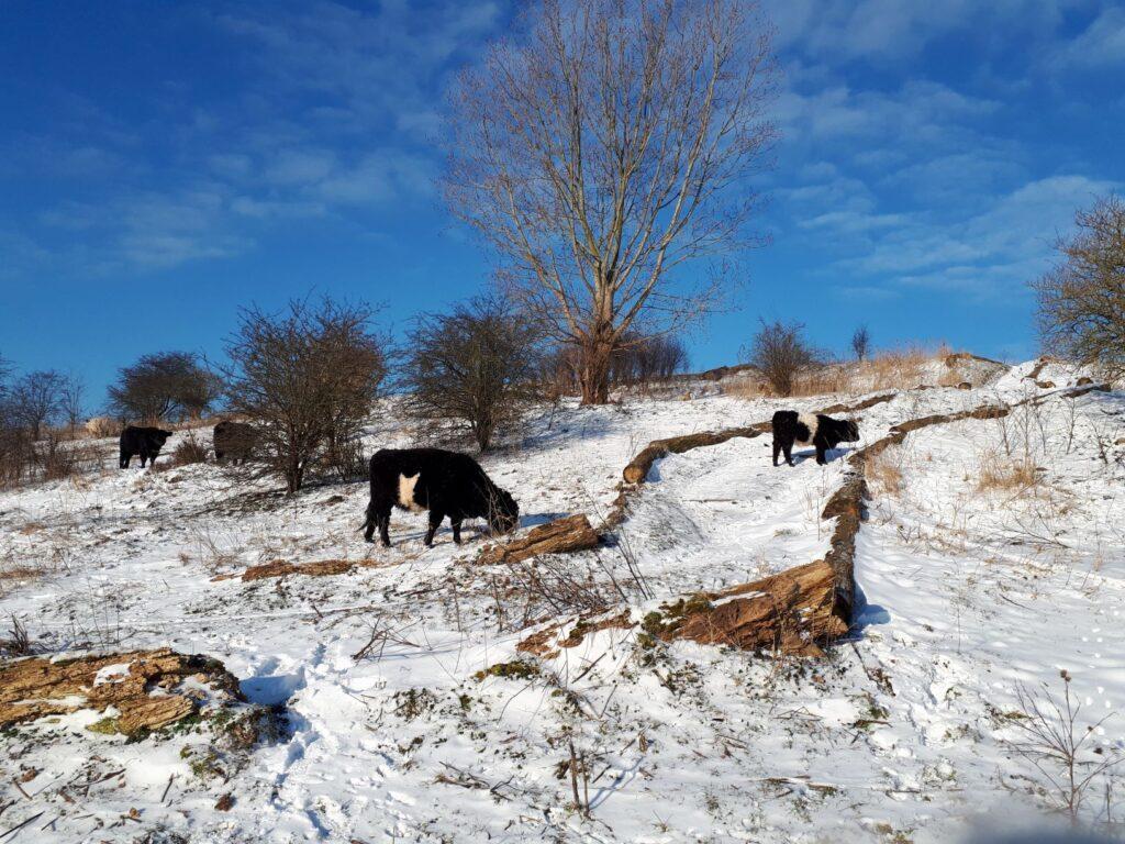 Buytenpark sneeuw