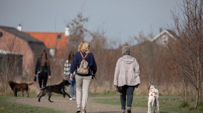 Honden Zoetermeer