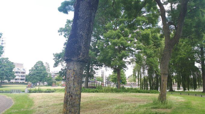 Bomen Zoetermeer
