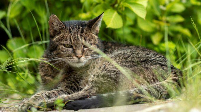 Katten Zoetermeer