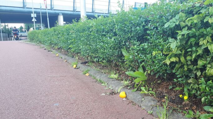 Sinaasappelschillen Zoetermeer