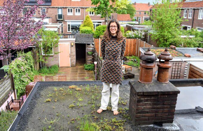 groen dak zwolle