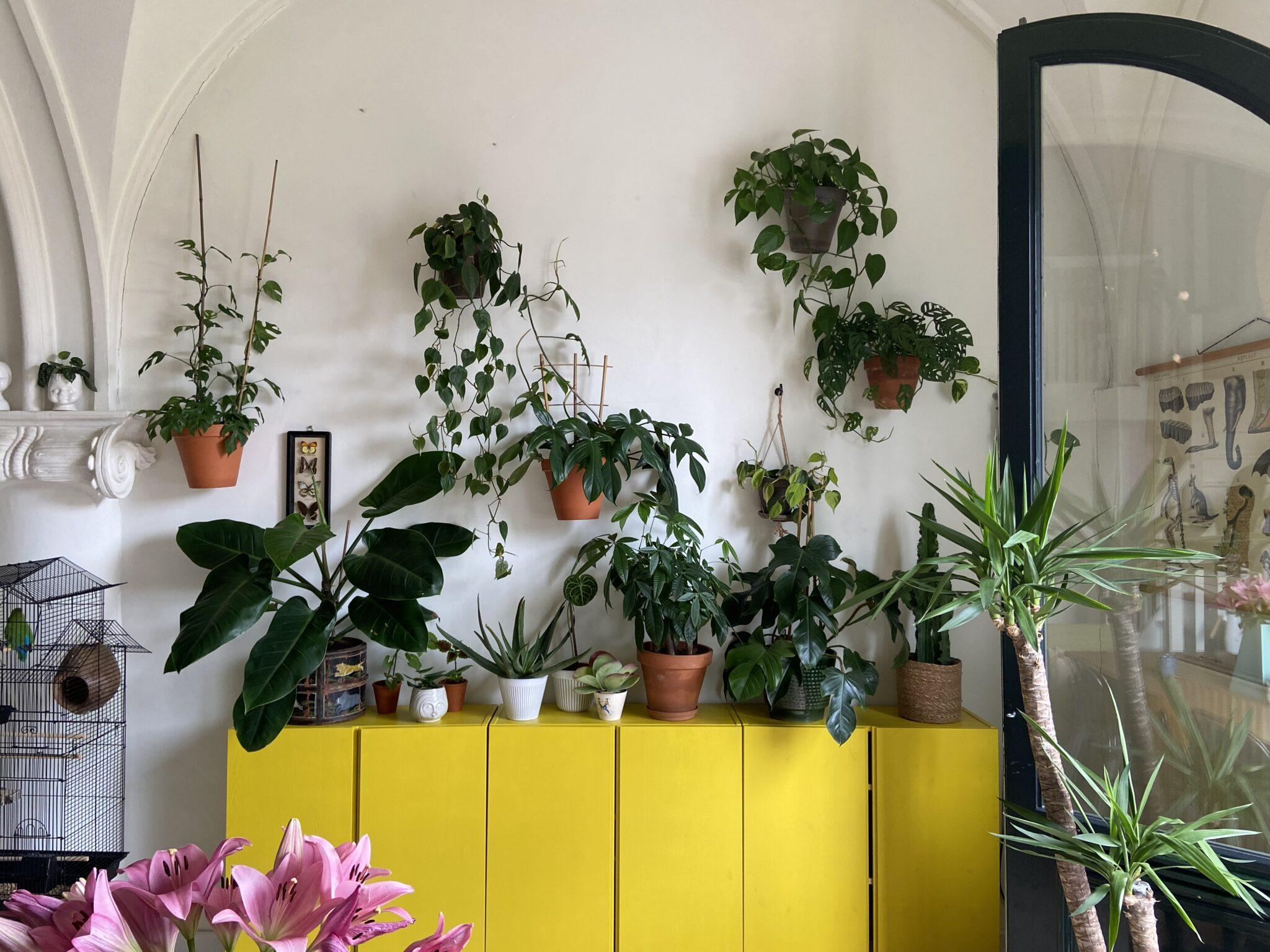 plantenhuis Zwolle